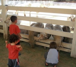 Learn what it was like to be a rancher in the 1880s at the Leonis Adobe Museum. PHOTO COURTESY LEONIS ADOBE MUSEUM