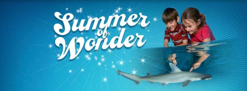 """""""Summer of Wonder"""" Exhibit"""