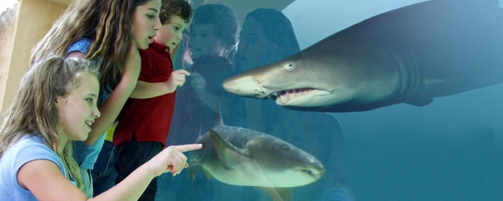 Shark Lagoon Nights