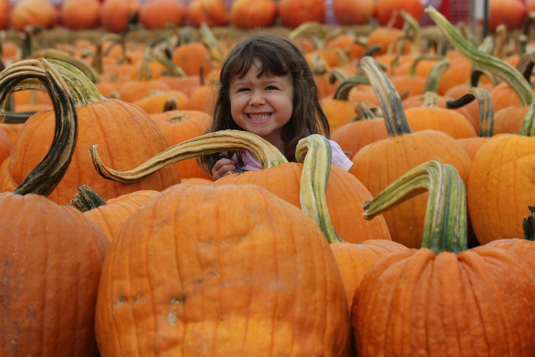 Forneris Farms, celebrating its 100th anniversary, is plump with pumpkins. PHOTO COURTESY THE JONES FAMILY