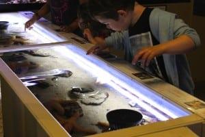 The Santa Monica Pier Aquarium includes an exhibit that illustrates urban development's impact on our oceans. PHOTO BY ERIN MAHONEY HARRIS