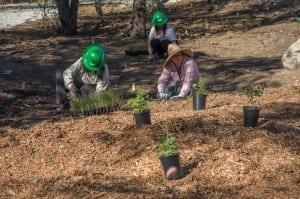 Volunteers helped to bring The Oak Woodland to life. PHOTO BY MARTHA BENEDICT