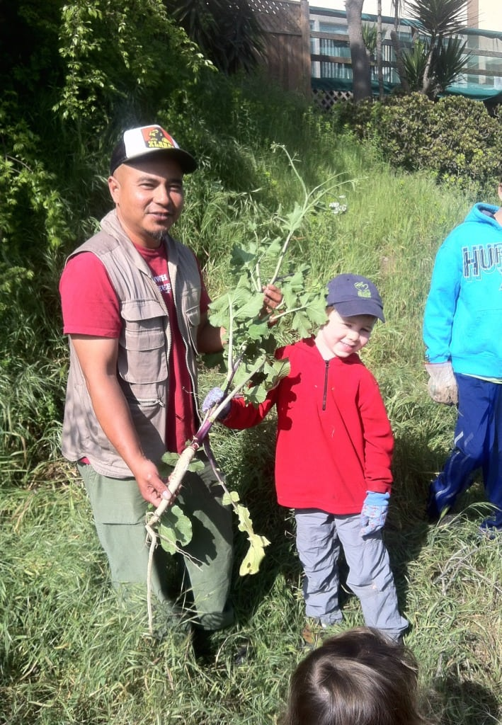 Kids can learn about California wetlands and native people, and help remove invasive plants, at Friends of Ballona Wetlands events. PHOTO BY ERIN MAHONEY HARRIS