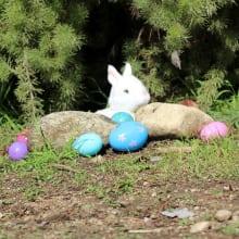 Kidspace's Egg Hunt