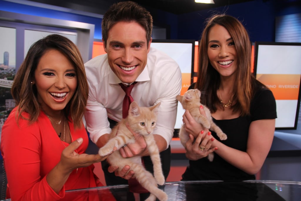 NBC4's Today in LA co-anchors Daniella Guzman and Whit Johnson, left, and traffic anchor Holly Hannula, cuddle cute shelter kittens Fiona and Shrek as part of the Clear the Shelters campaign. PHOTO COURTESY NBC4