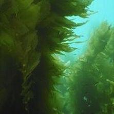 Aquarium of the Pacific's Underwater Parks Day