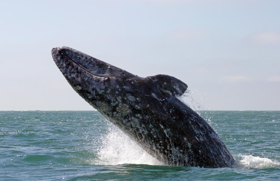 Channel Islands Harbor' Whale Fun Day