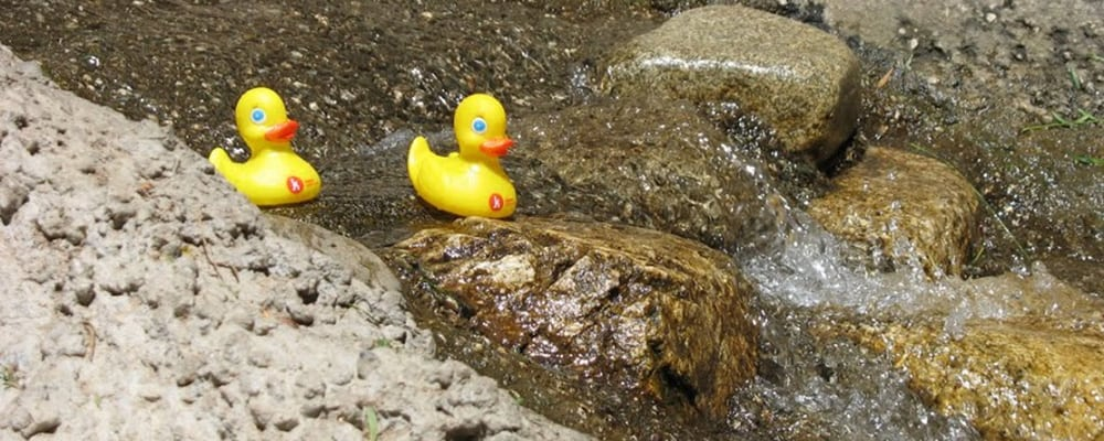 Rubber Ducky Races