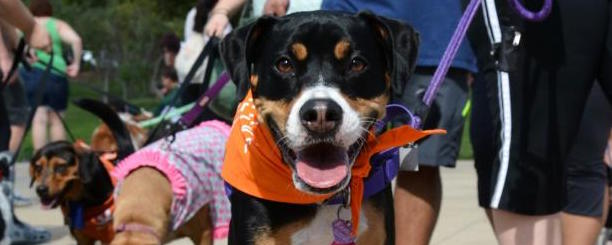 """Best Friends Animal Society's """"Strut Your Mutt"""" Event"""
