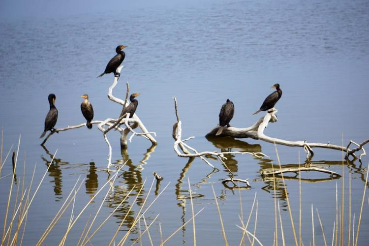 Malibu Lagoon Field Trips: Family Birdwatching Walk