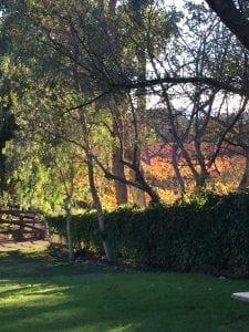 1losolivos_countryside3
