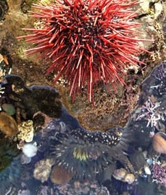 NHM In the Field: Abalone Cove
