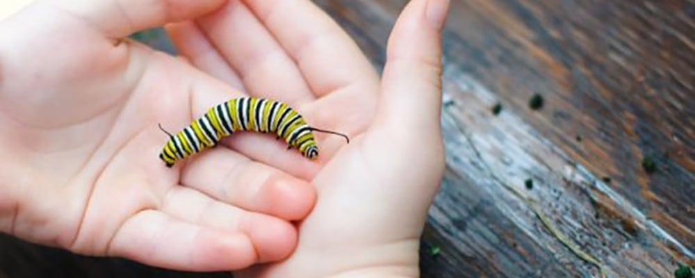 Caterpillar Adoption Days
