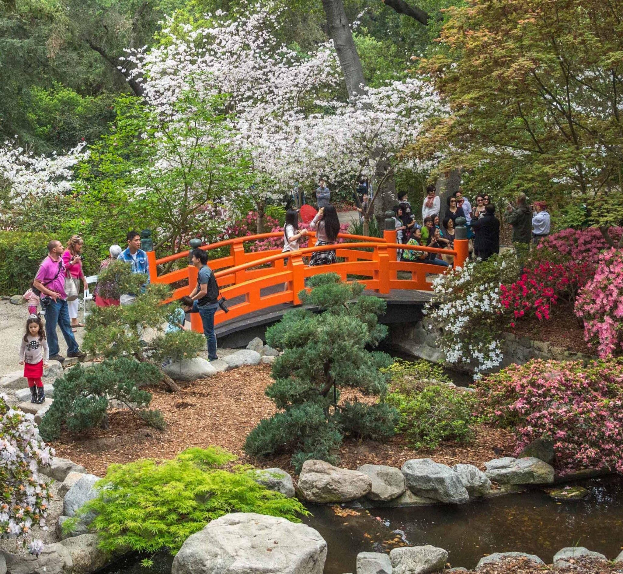 Spring Bloom Walks