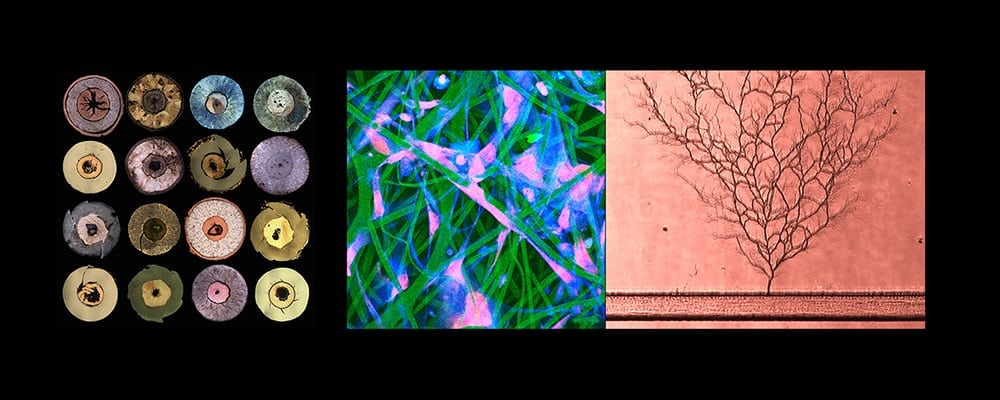 LABSCAPES: Views Through The Microscope