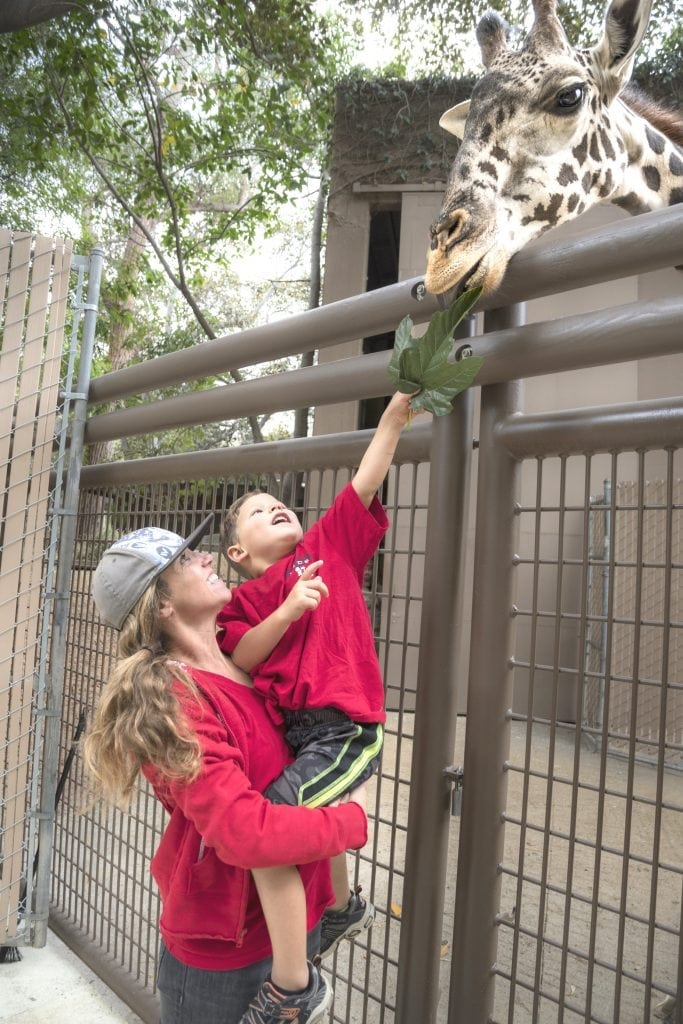 It S Giraffe Feeding Time And Time For Los Angeles Family Fun At The L A Zoo