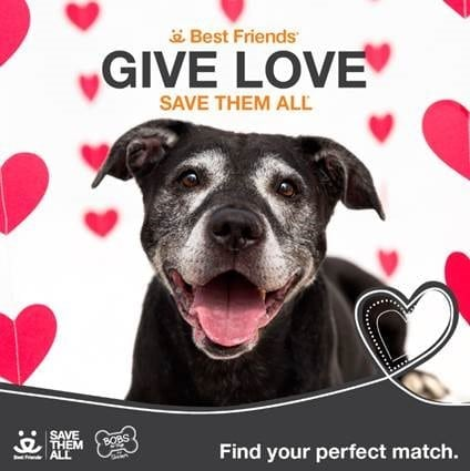 """Give Love"" Valentine's Day Pet Adoption Event"
