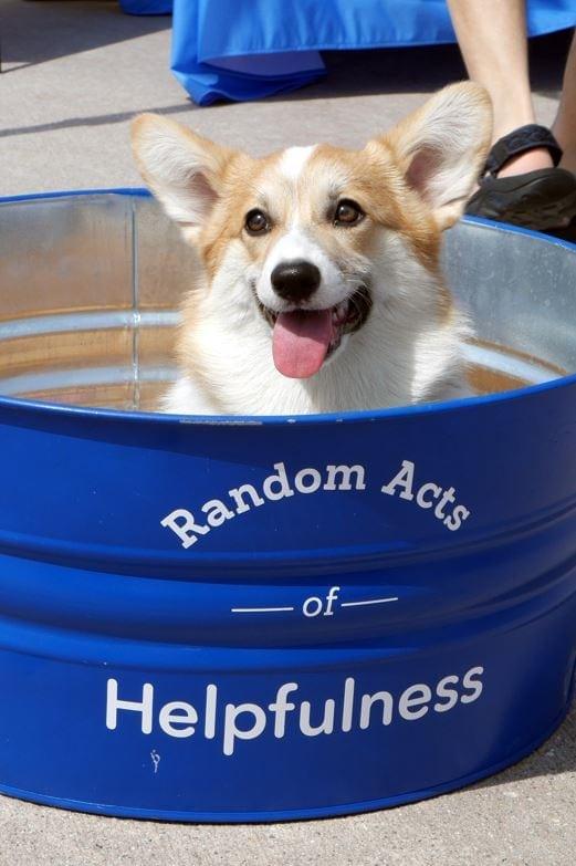 Helpful Honda's Pet Adoption