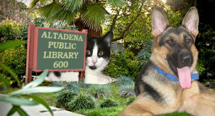 Altadena Library Pet Adoption Faire