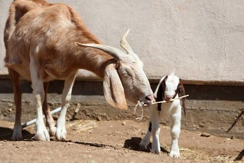 Mother's Day Brunch at Farm Sanctuary