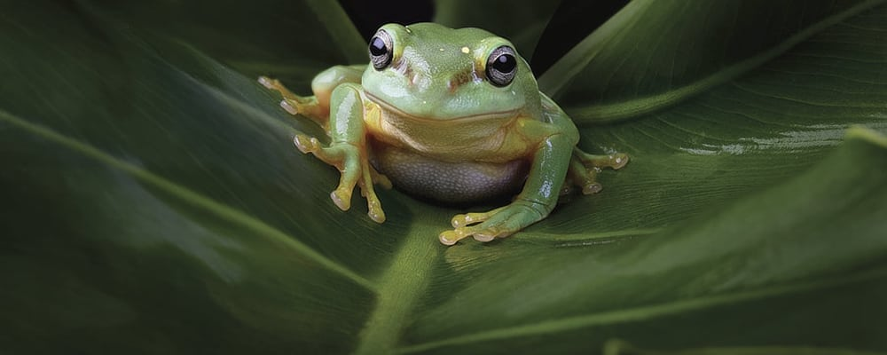 FROGS: Dazzling and Disappearing Exhibit