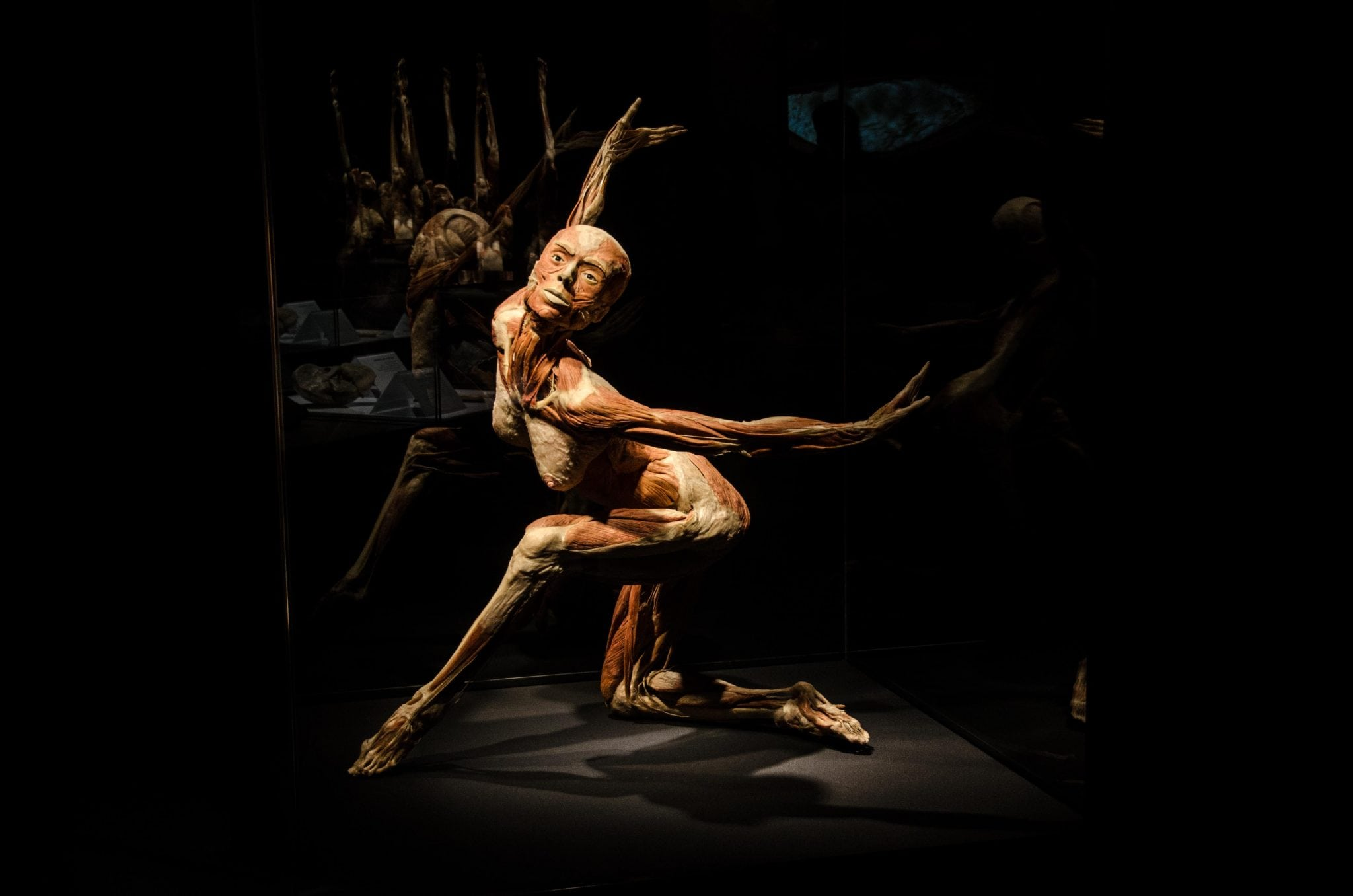 Body Worlds: Pulse Exhibit