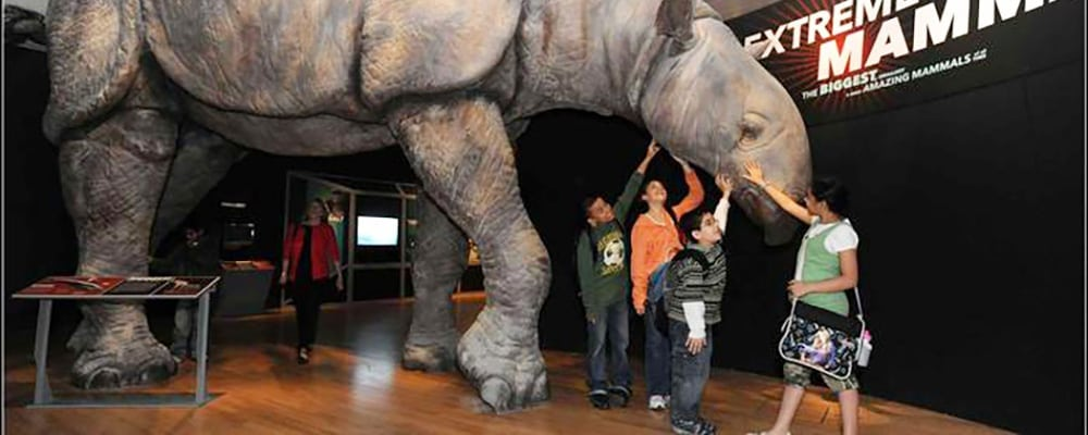 Extreme Mammals: Odd Features. Unusual Creatures Exhibition