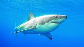 June Fishtivities: Shark Week