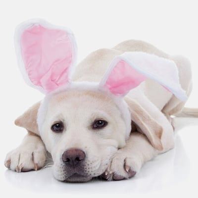 Pet Photos with the Easter Bunny at The Shops at Montebello