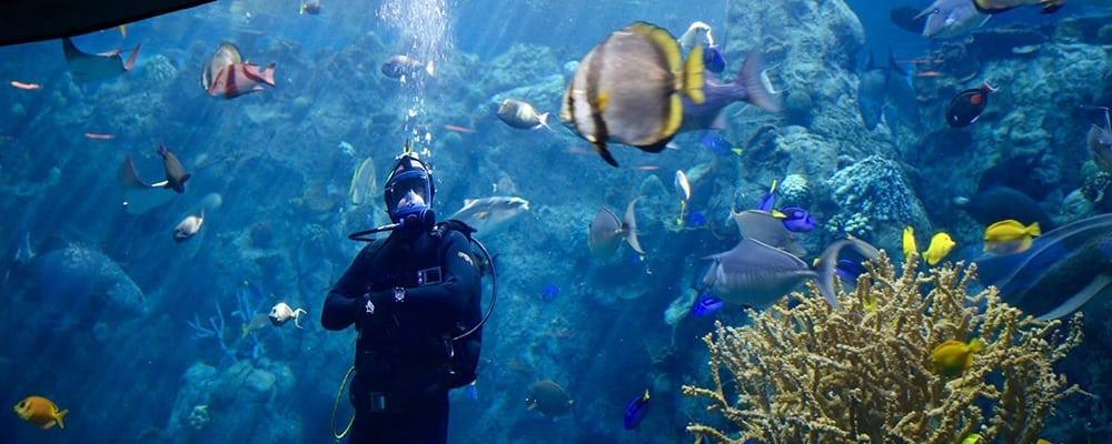 World Ocean Day Celebration