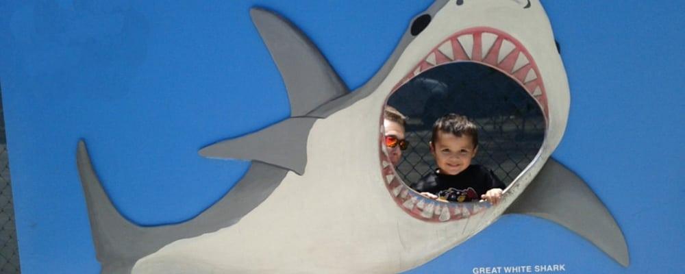 CMA's Shark Week