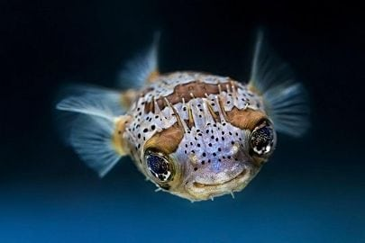 Aquatots: 123…Countin' in the Sea