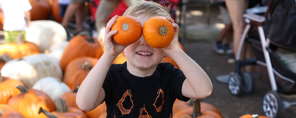 Irvine Park Railroad's Pumpkin Patch
