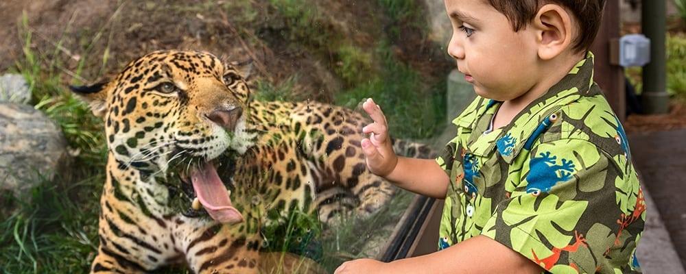 Safari Days at the LA Zoo