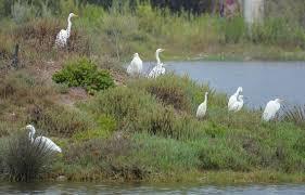 Malibu Lagoon Field Trips