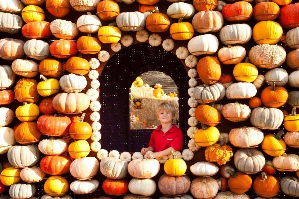 pumpkin patch in los angeles