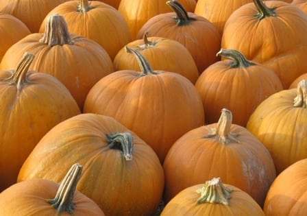 Channel Islands Harbor's Annual Farmers Market Pumpkin Fun Day