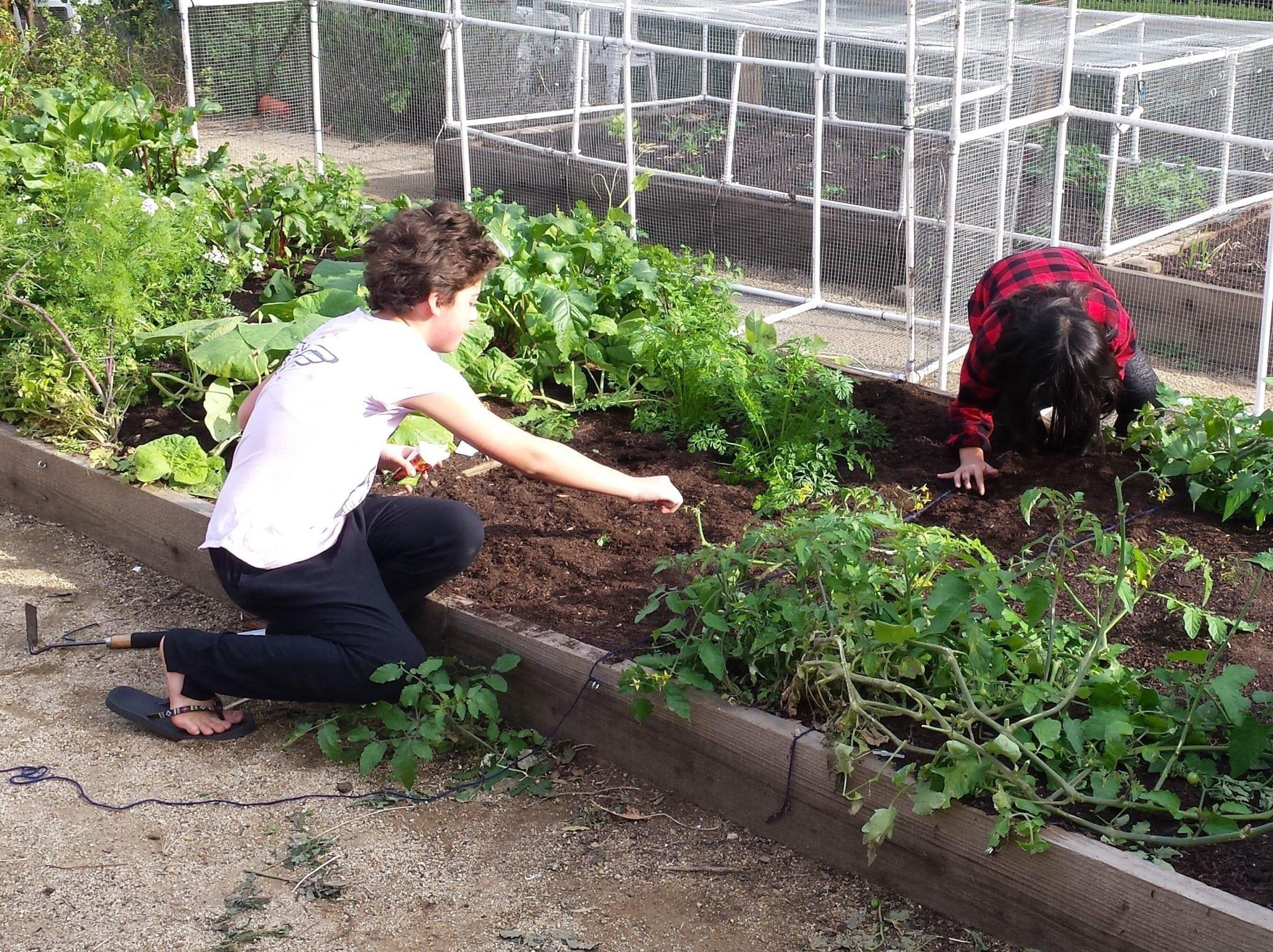 Gardening Workshops for Kids
