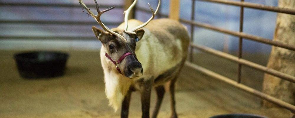 Reindeer Romp Holiday Celebration