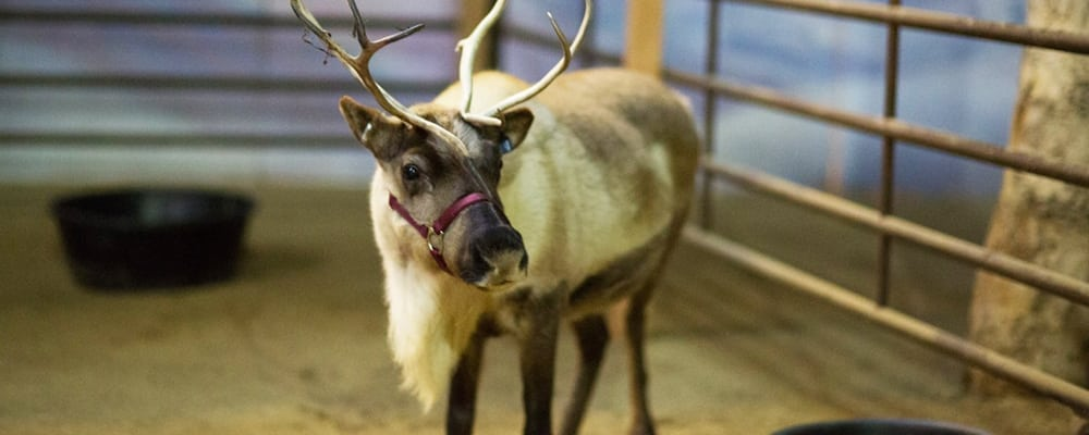 Reindeer Romp Holiday Celebration