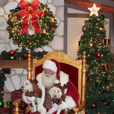 Pet Nights With Santa