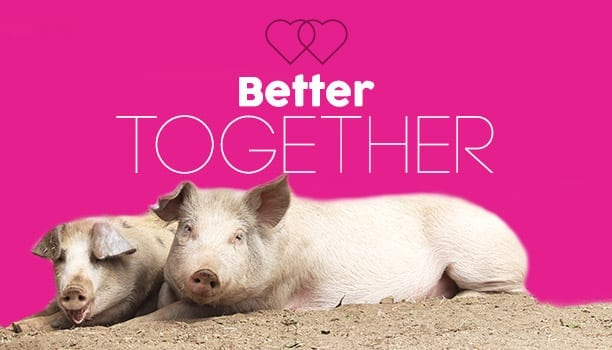 Better Together: The Farm Sanctuary's Valentine's Event