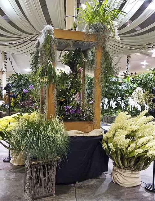 73rd Annual Santa Barbara International Orchid Show
