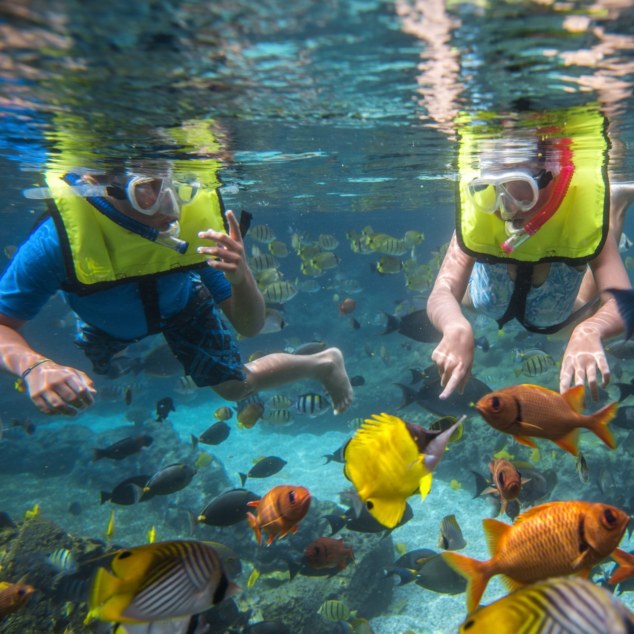 cad857cdf27 A Plunge Into Culture at Disney s Aulani Resort