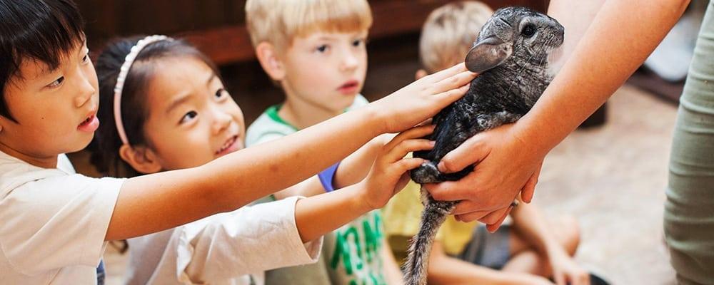 Reptacular Animals Meet and Greet
