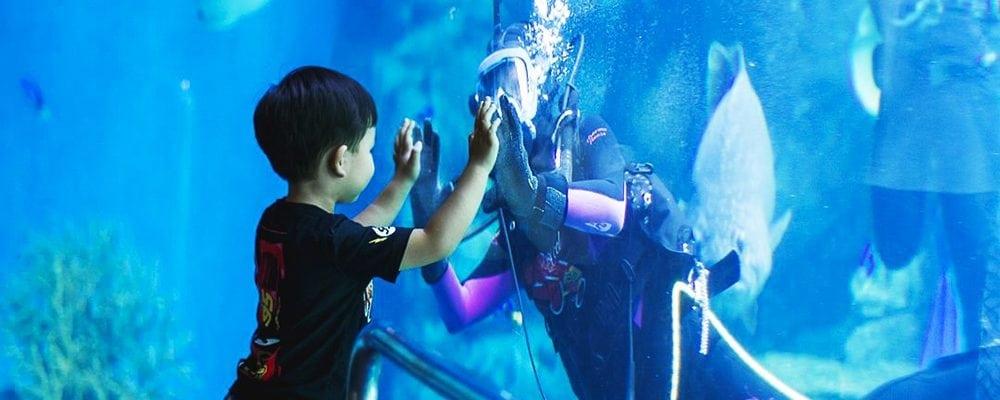Aquarium of the Pacific's 20th Anniversary Celebration
