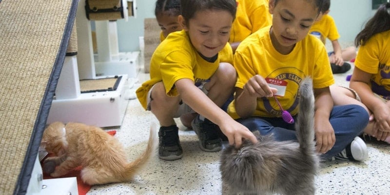 Animal Adventurers Workshop: Feline Fun - Cats 101