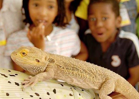 Animal Adventurers Workshop: Critter Crazy