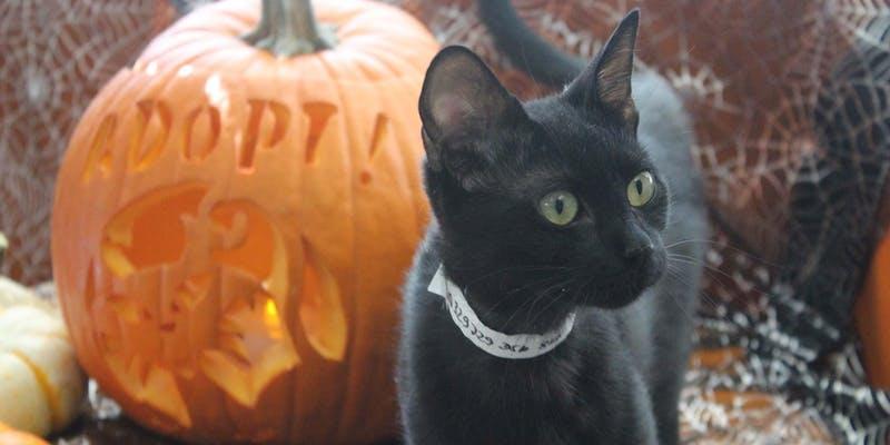 Halloween Animal Adventurers Workshop: Cats, Bats and Rats