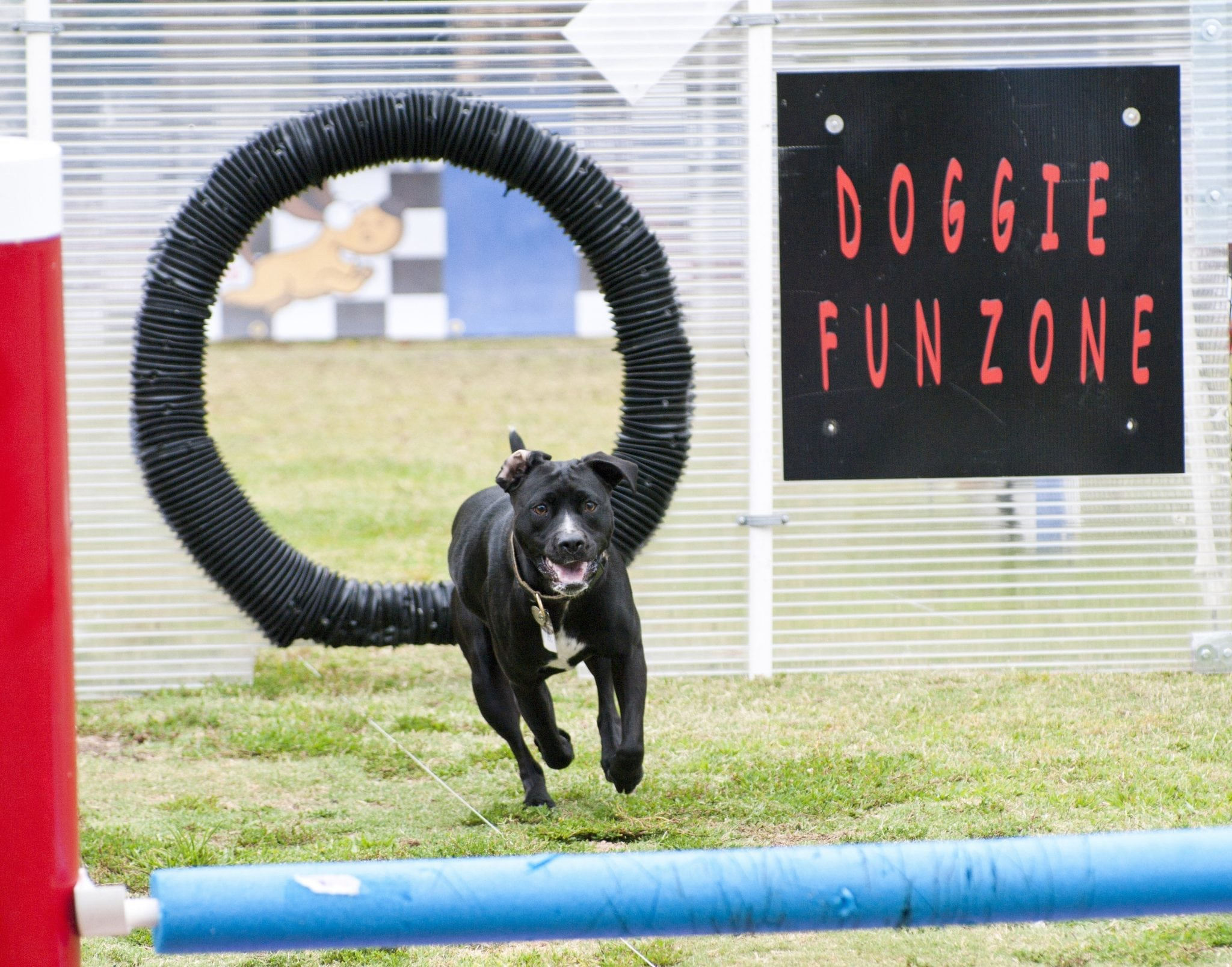 13th Annual k9 connection's Summer Fest